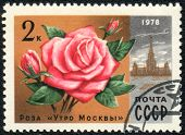 Rose The Morning Of Moscow