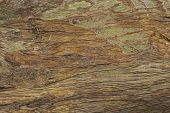 Old Grungy Wooden Surface Texture. Warm Brown Timber Texture Macro Photo. Natural Wood Background. D poster