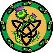 thistle in the celtic style