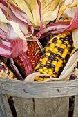 American Indian Corn In A Basket
