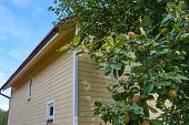 Red Delicious Apple. Shiny Delicious Apples Hanging From A Tree Branch In An Apple Orchard poster