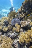 Colorful Coral Reef At The Bottom Of Tropical Sea, Soft And Hard Corals, Underwater Landscape poster