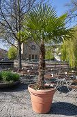 A Large Palm Plant In A Large Wooden Pot In A Street Cafe In A European City poster