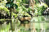 Deercrossing
