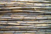 Set Of Horizontal Dried Canes