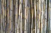 Set Of Vertical Dried Canes