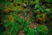 Beautiful Taiga Background With Rich Flora On Mossy Slope. Green Grass Among Thick Mosses On Mountai poster