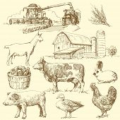 picture of farm animals  - farm collection - JPG