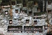 Traditional statues tau tau on a rock wall. Toraja region of Sulawesi island. Indonesia