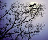 The moon behind tree branches and bats