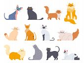 Cat Breeds. Cute Fluffy Cats, Maine Coon, Bobtail, Siamese Cat And Funny Sphynx Cat, Pedigree Breeds poster
