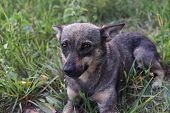 Cute Dog Looking At Owner Asking For Food, Friendly Puppy Lying In The Grass, Animal Adoption Concep poster