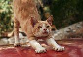 Red Cat Stretching