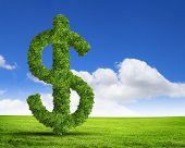 Green grass  US dollar symbol against blue sky