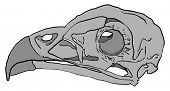 cartoon illustration of a bird skull