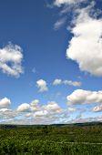 Expansive Skies