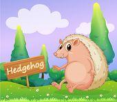 Illustration of a hedgehog beside a wooden signage