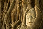 Head of Buddha in Wat Mahathat - symbol of Ayutthaya, Thailand.