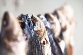 Salted dried fish for sale