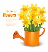 Yellow fresh spring flowers in green watering can. Vector illustration.