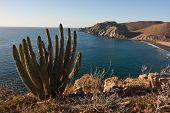 Desert Beach With Cactus