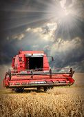 Combine harvesting wheat  against dramatic sky.