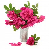 Rugosa rose flower arrangement in an aluminium vase over white background.