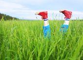 Pies con alegría sobresale una hierba de la diversión