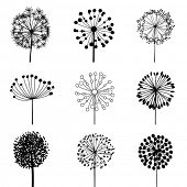 stock photo of dandelion  - Floral Elements for design - JPG