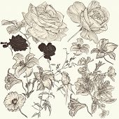 Collection Of Hand Drawn Detailed  Flowers For Design