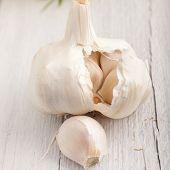 Garlic Clove And Bulb