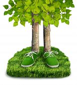 image of carbon-footprint  - Green carbon footprint environmental concept trees with shoes isolated - JPG