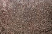 Hippopotamus Skin