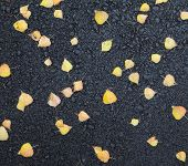 yellow leaves on wet asphalt