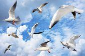 Group Of Sea Gulls