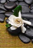 gardenia flowers and black stones on mat