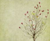 stock photo of magnolia  - magnolia flowers on old paper background - JPG