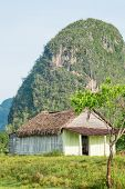 Rural scene with a rustic house known as bohio at the Vinales Valley in Cuba, worldwide known for it