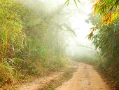 Ground road in jungle near Umphang. Tak Province in northwestern Thailand.