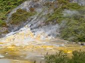 Green Forest Geothermal Geyser Orakei Korako Nz
