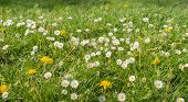 Blooming Wildflowers In A Meadow