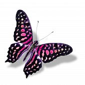 The Beautiful Pink Butterfly Flying Isolated On White Background With Soft Shadow
