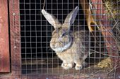 stock photo of rabbit hutch  - Gray rabbit in cage on a sunny day - JPG