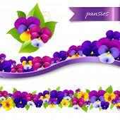 Pansies Borders Set, With Gradient Mesh, Vector Illustration