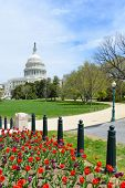The Capitol in Spring season - Washington DC, United States of America
