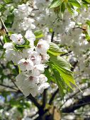 White florets