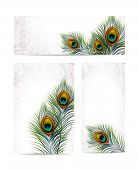 Set of Beautiful vector peacock feathers. EPS 10
