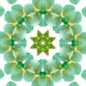 Mandala Kaleidoscopic Design. Flower Center Macro Close-up