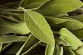 Raw Green Organic Sage