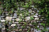 Crumbling Wall at Ninfa